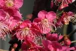 http://photo.woodsmall.jp/images/bo_01.jpg