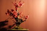 http://photo.woodsmall.jp/images/bo_02.jpg