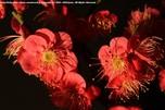 http://photo.woodsmall.jp/images/bo_03.jpg