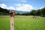 http://photo.woodsmall.jp/images/na_10.jpg