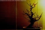 http://photo.woodsmall.jp/images/ni_22.jpg