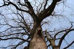 http://photo.woodsmall.jp/images/pl_01.jpg